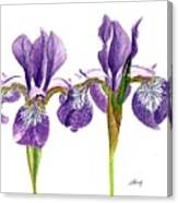 Dancing Iris Canvas Print