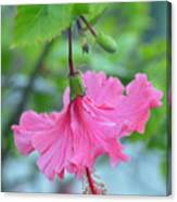 Dancing Lady Pink Hibiscus Canvas Print