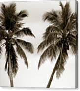 Dancing Palms Canvas Print