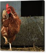 Dancing Rooster Canvas Print