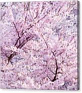 Dancing Sakura Haiku Canvas Print