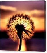 Dandelion At Sundown Canvas Print