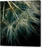 Dandelion Eighty Six Canvas Print