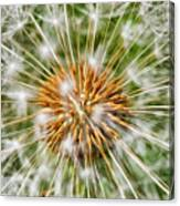 Dandelion Explosion Canvas Print