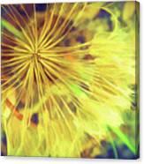 Dandelion Harvest Canvas Print