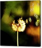 Dandelion Heart  Canvas Print