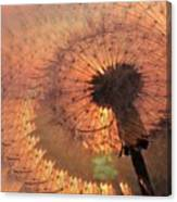 Dandelion Illusion Canvas Print