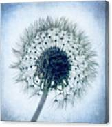 Dandelion In Blue Canvas Print