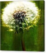 Dandelion In Green Canvas Print