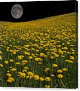 Dandelion Moon Canvas Print