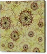Dandelion Nosegay Canvas Print