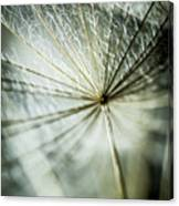 Dandelion Petals Canvas Print