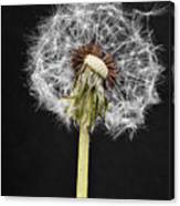 Dandelion Seed Canvas Print