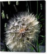 Dandelion Seedball Canvas Print