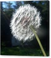 Dandelion Seeds 102 Canvas Print