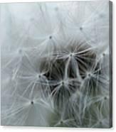 Dandelion Seeds Close-up Canvas Print