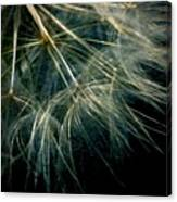 Dandelion Thirty Seven Canvas Print