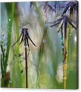 Dandelions Close-up Canvas Print