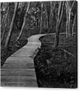 Daniel Webster Boardwalk IIi Canvas Print