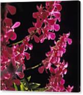 Danrobium Orchids Used To Make Lais Canvas Print