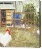 Dan's Chickens Canvas Print