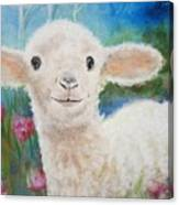 Daphne Star's Ears.   Flying Lamb Productions  Canvas Print