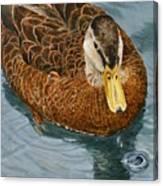 Daphne Waddell Canvas Print