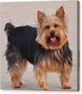 Dapper Dog Canvas Print