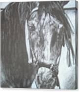 Dapple Andalusian Canvas Print