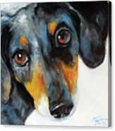 Dapple Doxie Canvas Print