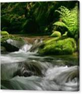Dappled Green Canvas Print
