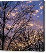 Dappled Sunset-1547 Canvas Print