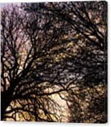 Dappled Sunset-1550 Canvas Print