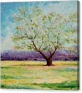 Dapples Apple Tree II Canvas Print
