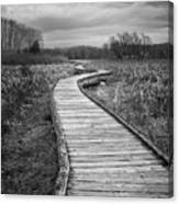 Dark Appalachian Trail Canvas Print