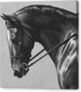 Dark Brown Dressage Horse Black And White Canvas Print