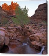 Dark Canyon Creek Canvas Print
