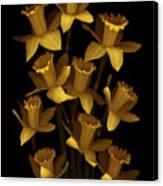 Dark Daffodils Canvas Print