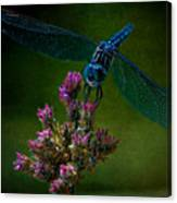 Dark Dragonfly Canvas Print