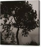 Dark Elm By River Canvas Print