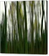 Dark Forest 3 Canvas Print