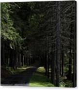 Dark Forest Road Canvas Print