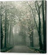 Dark Gloomy Alley In Woods Canvas Print
