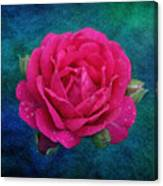 Dark Pink Rose Canvas Print