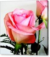Dark Pink Tipped Roses Canvas Print