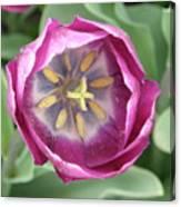 Dark Pink Tulip Canvas Print