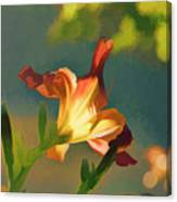 Dark Red Day Lily With Sun Shining Through I Abstract I Canvas Print