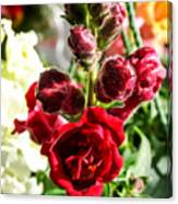 Dark Red Fancy Snapdragon Canvas Print