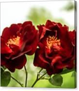 Dark Red Roses Canvas Print
