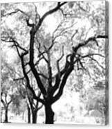 Dark Roots Canvas Print